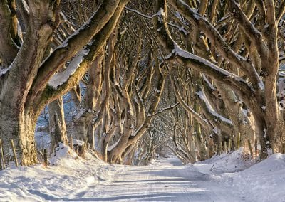 The dark hedges in winter
