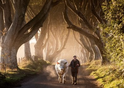 A man walking through the dark hedges